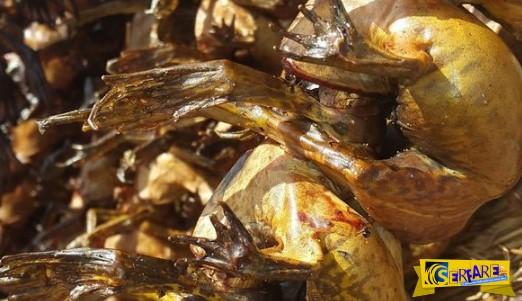 Αηδία: Η ποιό εκλεκτή λιχουδιά της Νιγηρίας ειναι τα... καπνιστά βατράχια!