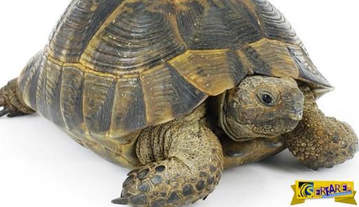 Πως είναι το εσωτερικό μιας χελώνας;