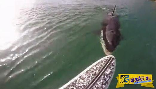 Μια φάλαινα δολοφόνος πλησίασε την σανίδα του. Τι έκανε αυτός; Θα σας αφήσει με το στόμα ανοιχτό!