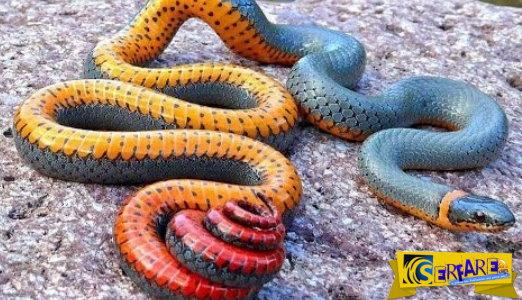 Τα 10 πιο περίεργα φίδια που υπάρχουν στη γη!