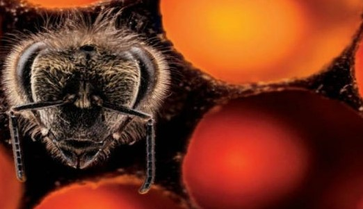 O ανατριχιαστικός και ταυτόχρονα μαγικός τρόπος που γεννιούνται οι μέλισσες!