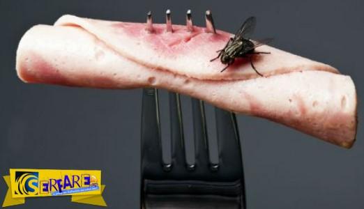 Μύγα ακούμπησε το φαγητό σας; Ε τότε πρέπει να δείτε αυτό το βίντεο!