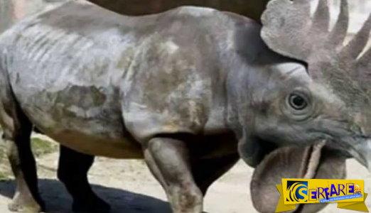 Παράξενα και ανατριχιαστικά ζώα που δεν πιστεύεις ότι υπάρχουν!