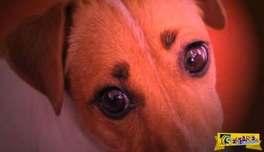 Ανατριχιαστικό! Σκυλίτσα γέννησε… άνθρωπο!
