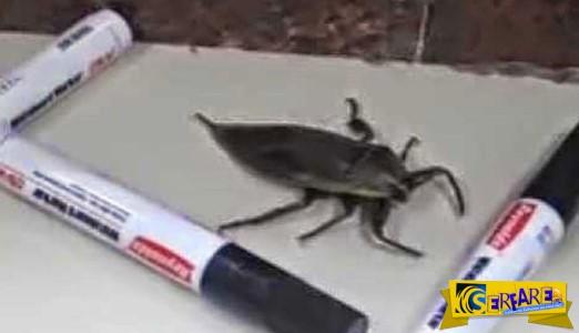 «Εγκλώβισαν» ένα τεράστιο έντομο με μαρκαδόρους για να το θαυμάσουν, αλλά…