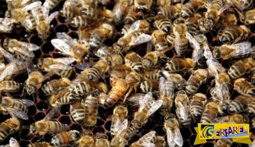 """Η εκδίκηση ενός """"στρατού μελισσών""""! Άνδρας υπέφερε 1.000 τσιμπήματα!"""