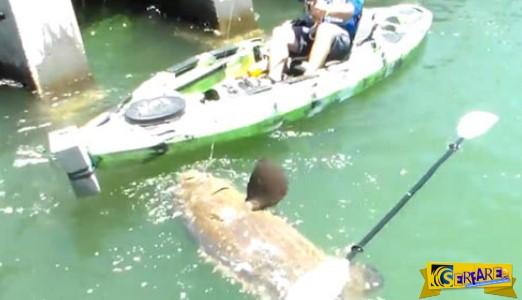 Όταν είδε να ανεβαίνει ένα ψάρι 250 κιλών, τα έχασε! Και εσύ βρε άνθρωπε, που πας με το καγιάκ για ψάρεμα…
