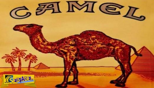 Για δες καλύτερα! Αλήθεια, τι κρύβει η καμήλα στα τσιγάρα Camel;