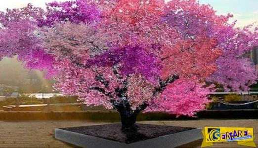 Υπάρχει δέντρο που βγάζει 40 ειδών φρούτα; Υπάρχει!