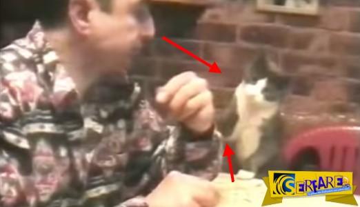 Αυτή η έξυπνη γάτα χρησιμοποιεί τη νοηματική γλώσσα και επικοινωνεί άψογα με τον κωφό ιδιοκτήτη της!