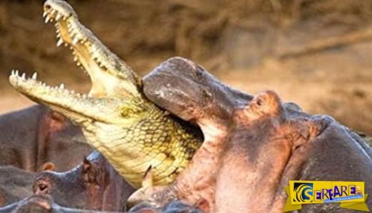 Δείτε ποια είναι τα πιο θανατηφόρα για τον άνθρωπο, ζώα στον πλανήτη!