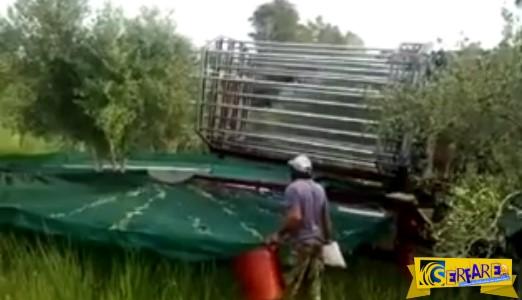 Πρωτοποριακό μηχάνημα μαζεύει τις ελιές!