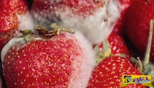Τι θα σας συμβεί αν φάτε κάτι που έχει πιάσει μούχλα;