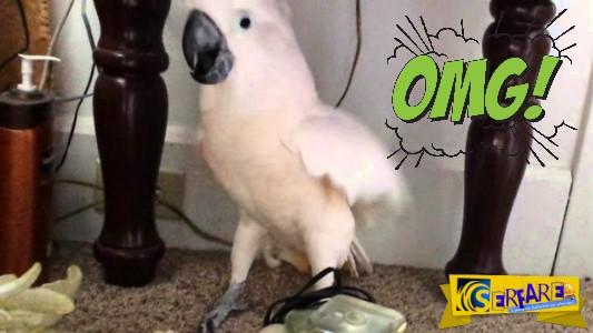 Πως αντέδρασε αυτό το είδος παπαγάλου όταν του είπαν ότι θα πάει στον κτηνίατρο...