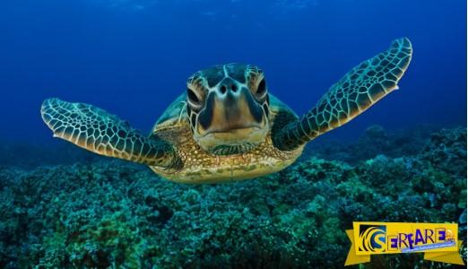 Τοποθέτησαν μια GoPro κάμερα σε μια θαλάσσια χελώνα και κατέγραψε μαγευτικά πράγματα!