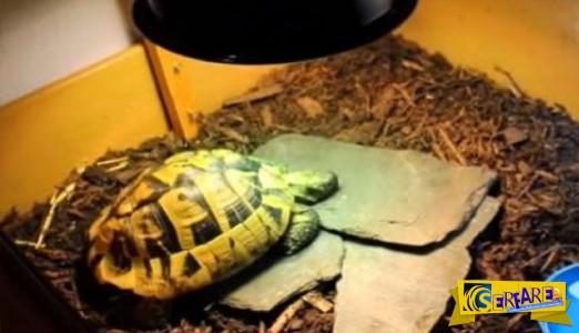 Έκλεισε την χελώνα του στην κατάψυξη για 4 μήνες! Δείτε τι συνέβη μετά...