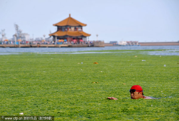 china-green-algae-1