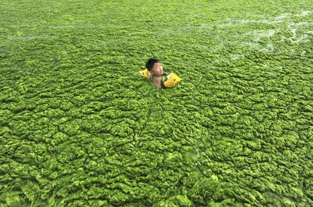 china-green-algae