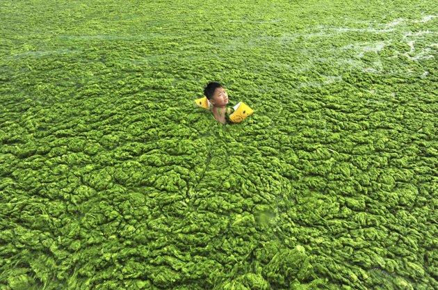 china-green-algae