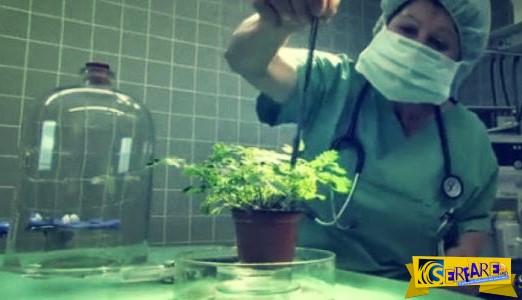 ΑΠΙΣΤΕΥΤΟ! Μπορούν να νιώσουν πόνο τα φυτά;
