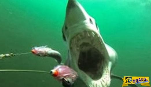 Το βίντεο-εφιάλτης που έγινε viral - Καρέ καρέ πώς είναι να σε κυνηγά και να σε τρώει καρχαρίας!