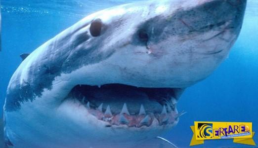 Καρχαρία 3 μέτρων ψάρεψαν οι ψαράδες στην Κρήτη!