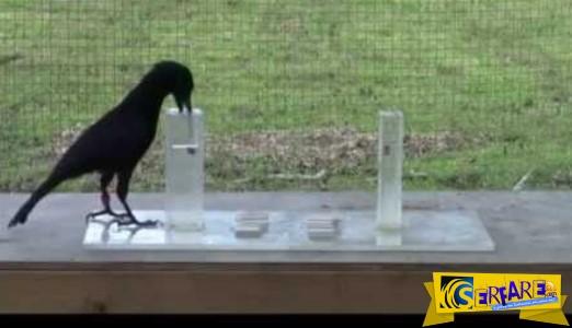 Ένα απίστευτο πείραμα με κοράκια που θα σας αφήσει άφωνους!