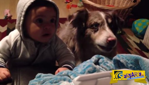 Τί μπορεί να οδηγήσει ένα σκύλο στο να μιλήσει; Δείτε παρακάτω ...
