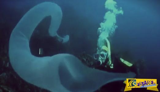 ΑΠΙΣΤΕΥΤΟ! Και φαντάσου εκεί που κολυμπάς, να εμφανιστεί κάτι τέτοιο!