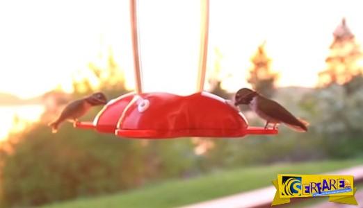 Τα πουλιά αυτά είναι τόσο ενθουσιασμένα από το φαγητό που δεν θα πιστέψετε πώς κάνουν!