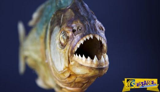 Τρομακτικός τρόπος για να ψαρεύεις πιράνχας! Εσύ τολμάς;