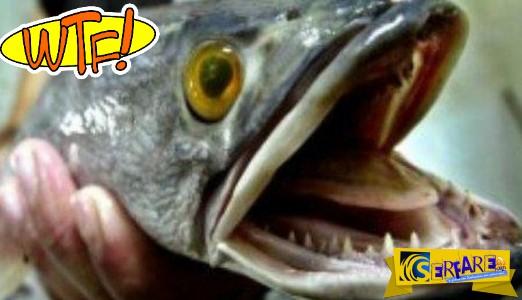 Απίστευτο βίντεο: Ψάρι πηδάει έξω από λίμνη, αρπάζει μια γάτα και τη σέρνει κάτω από το νερό