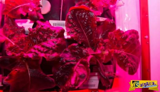 Την πρώτη διαστημική… σαλάτα γεύθηκαν αστροναύτες!