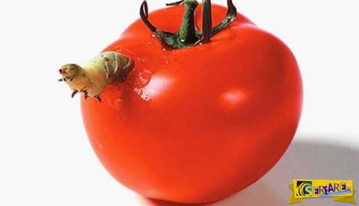 Η τροφική αλυσίδα σε μια «άγρια» φωτογράφηση!