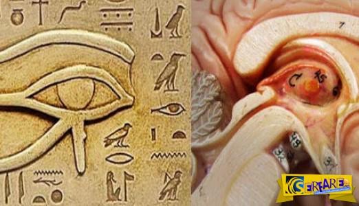 Οι αρχαίοι Αιγύπτιοι γνώριζαν πώς να χρησιμοποιούν τη δύναμη της επίφυσης!