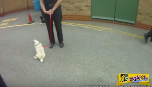 ΤΕΛΕΙΟ: Η αντίδραση ενός κλεμμένου σκύλου όταν επιστρέφεται στην ιδιοκτήτρια του...