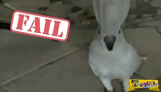 Ο παπαγάλος που... γαβγίζει