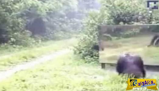 Ένας καθρέφτης μέσα στη ζούγκλα - Δείτε πως αντιδρούν τα ζώα ...