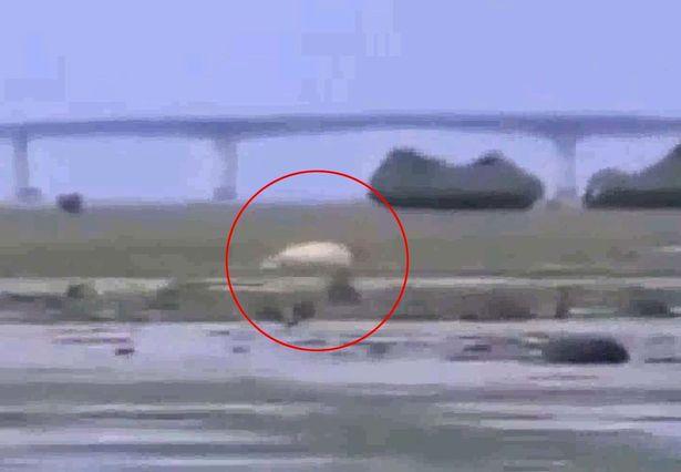 Japan-Tsunami-strange-creature