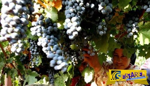 """Σε ποια χώρα παράγεται το πιο """"επικίνδυνο"""" κρασί στον κόσμο;"""