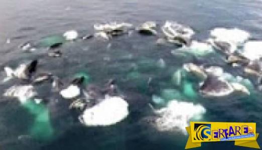 Παρατήρησαν έναν τεράστιο κύκλο να αφρίζει στη θάλασσα και όταν είδαν τι ήταν έμειναν έκπληκτοι!