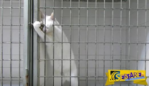 Η πονηρή γάτα που άφησε άφωνο όλο το Internet με την απόδρασή της!