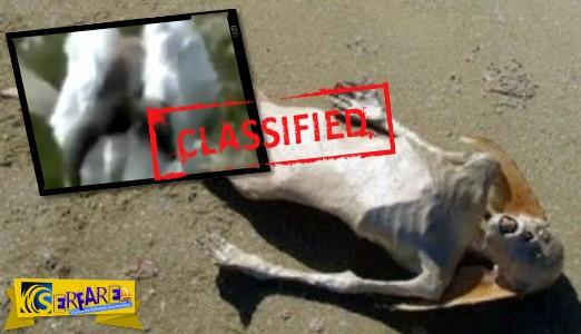 """ΣΟΚ: Βρέθηκε απίστευτο """"ον γοργόνα"""" σε λίμνη;"""