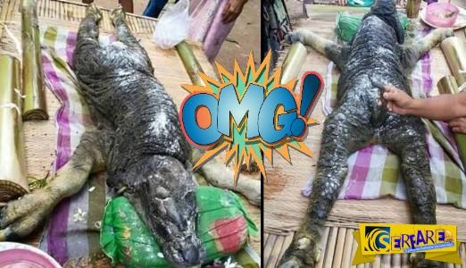 Μοσχαράκι με....δέρμα κροκόδειλου στην Ταϊλάνδη!