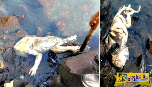 Μυστηριώδες πλάσμα βρέθηκε από μια ομάδα πυροσβεστών σε ακτή στην Ουρουγουάη!