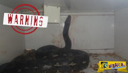 ΣΟΚ: Πύθωνας 6 μέτρων & 56 κιλών επιτέθηκε & καταβρόχθισε τον ιδιοκτήτη pet shop - η μάχη για την διάσωση