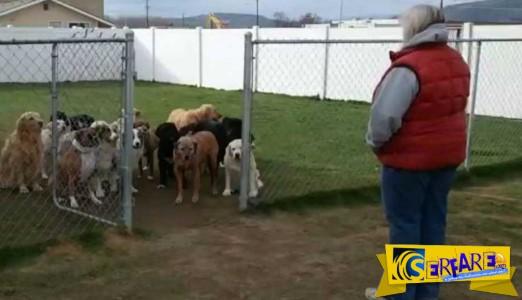 Φωνάζει αυτά τα σκυλιά με το όνομα τους και βγαίνουν ένα-ένα!