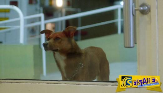 Συγκλονιστικό: Σκύλος μύρισε την καρδιά του αφεντικού του σε ξένο σώμα – Δείτε την αντίδρασή του