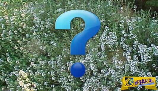 Δείτε το βότανο από την Ελλάδα που καταπολεμά τον καρκίνο!