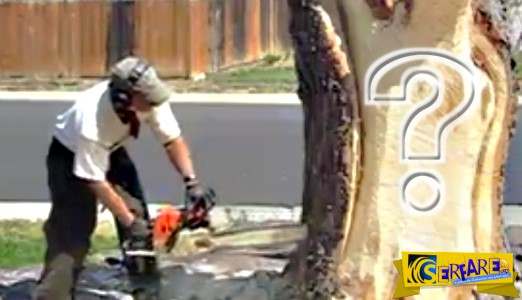 Μετέτρεψε το δέντρο της αυλής σε έργο τέχνης! Θαυμάστε το ...